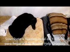 Animal Help - Rescate de perrita accidentada frente al liceo de Pando 20...