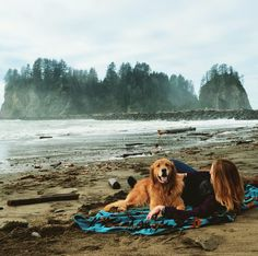 Beach dog, beach, dog, Golden Retriever, Gordon Setter, Golden Retriever Puppy, Golden Retriever Dog, Dog, Puppy, Driftwood, Driftwood beach, pacific northwest, PNW, Pacific Northwest Beaches, happy dog, playing dogs, adventure, wanderlust, explore, man's best friend, washington, coastline, beach adventure, goldens