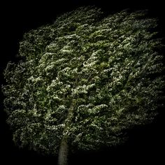 alberi   Irene Kung