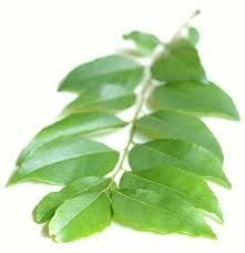 **The first and most important thing to know about curry leaf is that it is NOT curry powder. It does not look like curry powder, it does no. Herbal Remedies, Health Remedies, Natural Remedies, Natural Treatments, Curry Leaf Plant, Curry Leaves, Home Remedies For Diabetes, Growing Ginger, Green Living Tips