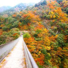 熊本が誇る人気紅葉スポット!「五家荘」の紅葉が美しすぎる | RETRIP[リトリップ]