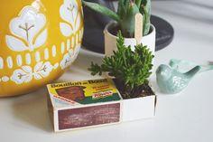 Des Succulentes Mise