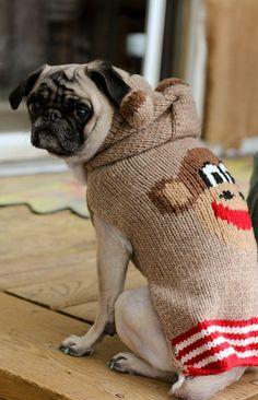 pug wearing sock monkey sweater. Love the sweater!  @Cynthia Sanchez Reeves