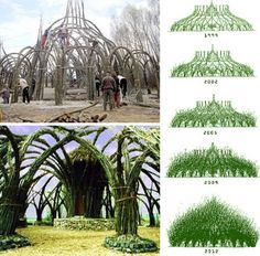 Auerworld Palace, living Cathedral constructed from Willow