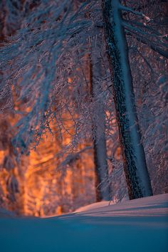 winterwald, Franconian Forest (Frankenwald) northern Bavaria, Germany. Photo: stephan_amm, via Flickr