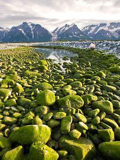 Moss covered rocks, Tatshenshini River, Yukon Territory, Canada
