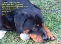 Role model for being alive  #dog #quotes