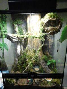 Pin by Micaela on Tank Ideas Gecko vivarium Gecko Lizard Habitat, Reptile Habitat, Reptile Room, Reptile Cage, Reptile Tanks, Terrariums, Gecko Terrarium, Reptile Terrarium, Diy Terrarium