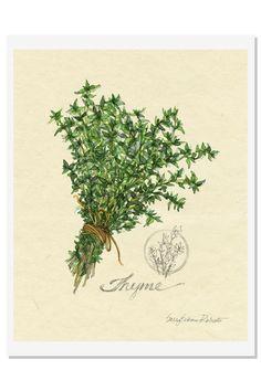 "Bring nature and your very own garden into your kitchen with this gathering of thyme tied by a piece of twine. This print is created from a watercolor painting by Sally Eckman Roberts and is enhanced by a mini drawing. Each print is hand signed by Sally. Packaged in a clear bag with backing board. Ready for framing.  Measures: 8.5"" x 11""  Herbs Print-Thyme by Sally Eckman Roberts. Home & Gifts - Home Decor - Wall Art Jensen Beach/ Hutchinson Island Florida"