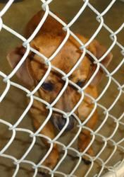 13-0575 is an adoptable Terrier Dog in Emporia, KS. IFound in Green Acres f interested in adopting a pet you will need to fill out a request to adopt. This needs to be on file overnight before you are...