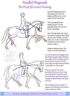 Parallel Digonals, or the unity of the diagonal pairs in trot, is a fundamental characteristic of the horse's natural movement, and is therefore a key marker of the purity of the gaits