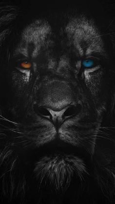Heterochromia Lion iPhone Wallpaper - iPhone Wallpapers