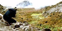 Parque Nacional de los Nevados, Colombia. Mount Everest, Mountains, Nature, Travel, National Parks, Earth, Colombia, Voyage, Trips