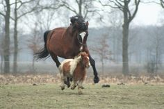 Horse and Pony playing.