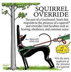 Squirrel Override