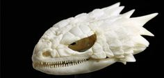 cool-critters:  The skull of an armadillo lizard!