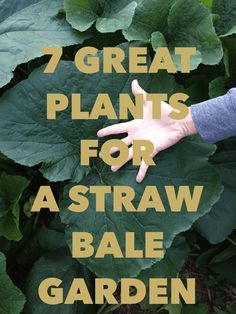 7 Great Plants For A Straw Bale Garden Straw Bale Gardening is a wonderful way to grow more, weed less, and garden almost anywhere. It's great for apartment patio's to large gardens and…