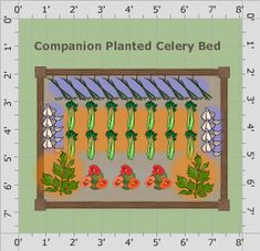 One bed of celery with companions, both attractive and productive. Window Plants, One Bed, Garden Types, Types Of Soil, Garden Soil, Companion Planting, Garden Planning, Celery, How To Plan