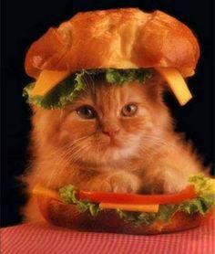 15 hilarious cats in costumes - kitten hamburger