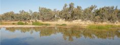 list of environmental issues | nature has no issues, billabong south of Alice Springs, central Australia