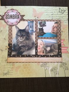 Layout about my cat sombra
