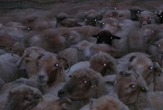 Southern Gothic, Cursed Images, Horror Movies, Sheep, Sick, Creatures, Cute, Aesthetics, Horror Photography