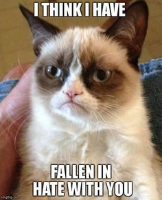 Funny grumpy cat, grumpy cat quotes, grumpy cat meme ....For more funny memes ad humor quotes visit www.bestfunnyjokes4u.com/lol-funny-cat-pic/