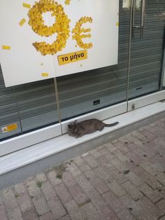 This cat is a bargain!