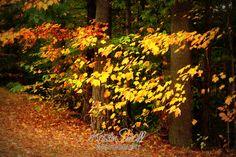 Autumn 2009 | Flickr - Photo Sharing!