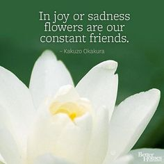 """In joy or sadness flowers are our constant friends."" -Kakuzo Okakura"