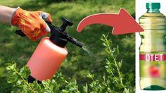 Iata cum poti folosi otetul in gradina - dr. Fire Extinguisher, Spray Bottle, Cleaning Supplies, Outdoor Power Equipment, Flowers, Gardening, Shake, Sun, Home