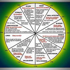 #horarycycles #bihourlyclock #chinesemedicine #chinesebodyclock #qicycles #qi…