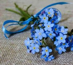 Little Flowers, Blue Flowers, Wild Flowers, Beautiful Flowers, Artsy Photos, Forget Me Not, Flower Crafts, Spring Flowers, Flower Power