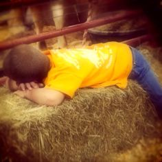 Found this lil guy passed out in the cow pen at the fair