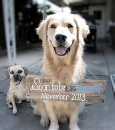 Pregnancy Announcement Signs for Dogs by ThePeaPickinHeart on Etsy, $35.00