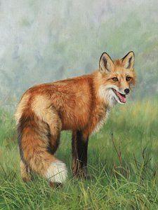 Painting - Fox  by David Stribbling