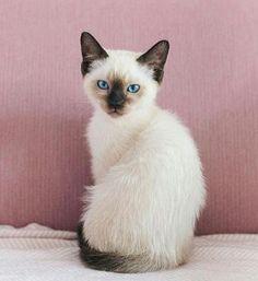 Stockholms länsstyrelse stal en katt som såg ut som denna.