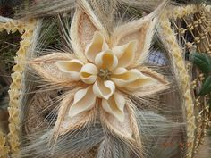 Podobny obraz Blush Weddings, Advent, Dandelion, Diy And Crafts, Creative, Garden, Flowers, Plants, Thanksgiving Holiday