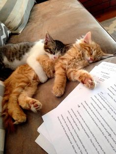 During night group study….. - http://cutecatshq.com/cats/during-night-group-study/
