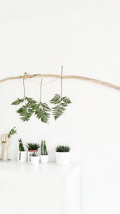 pflanzen an der wand im setzkasten gestalten pflanzen urban jungle h ngepflanzen wohnen. Black Bedroom Furniture Sets. Home Design Ideas