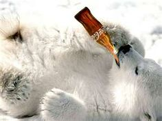 POLAR BEARS LOVE COKE