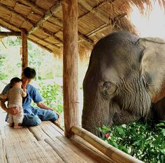 Up close and personal....Boon Lott's Elephant Sanctuary @ Thailand  can't sleep...thinkin about elephants