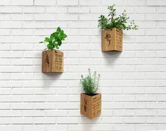 Hey, I found this really awesome Etsy listing at http://www.etsy.com/listing/155198003/wood-engraved-triangle-herb-planter