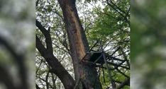 Have you ever sat in a treestand and wondered what would happen if lightning struck? Ladder Stands, Lightning Strikes, Bow Hunting, Animals, Eat, Stair Brackets, Animales, Animaux, Animal