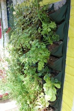 Easy living wall method - great for herbs!