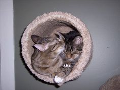Two cats enjoying a wall mounted Kitty Cubby. Apparently, they are good for bathing as well as relaxing. #cat #kitten #bed
