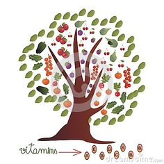 Decorated Tree With Fruits And Vegetables Stock Vector - Illustration of decorated, concept: 53796626 Radish Salad, Apple Pear, Vegetable Stock, Stuffed Green Peppers, B & B, Fruits And Vegetables, Cherries, Tomatoes, Plum