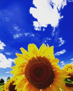 •taken with my Canon 7D �� Blenheim, Ontario Canada  #yourstodiscover #travel #photography #canon #canon7d #canonphotography #photo #sunflowers #canada #travelontario #travelcanada #wanderlust #roadtrip #travelcanada #yqg #ontario #windsorphotographer #explore #explorecanada http://tipsrazzi.com/ipost/1505575262400695505/?code=BTk4LlqAkzR