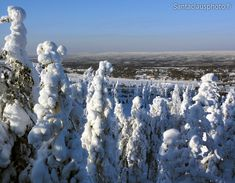 Winter landscape in Rovaniemi in Lapland in Finland