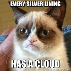 grumpy cat #GrumpyCat #Meme